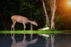 Un ciervo en el árbol inferior fotografía de archivo libre de regalías