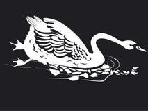 Un cigno solo sta nuotando Fotografia Stock