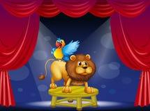 Un circo che mostra il leone ed il pappagallo Fotografia Stock Libera da Diritti