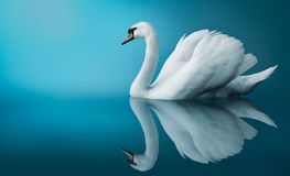 Un cisne libre illustration