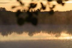 Un cisne blanco foto de archivo libre de regalías