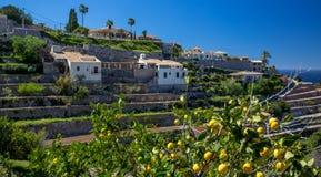 Un citronnier, et un beau paysage image libre de droits