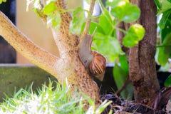 Un clamber della lumaca fino all'albero al giardino dopo il giorno piovoso fotografia stock