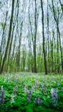 Un claro en el bosque Fotografía de archivo libre de regalías