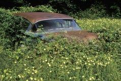 Un coche de los años 50 que aherrumbra descansa en un matorral de hojas y de flores overgrown en Ridge Mountains azul de Virginia Foto de archivo libre de regalías