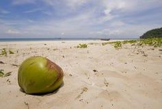Un coco en una playa tropical Foto de archivo