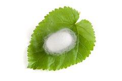 Un cocon de ver à soie Image stock