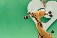 Un coeur blanc pour deux girafes Images stock