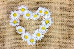 Un coeur de fleur des marguerites Photographie stock libre de droits