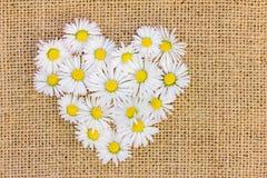 Un coeur de fleur des marguerites Photographie stock