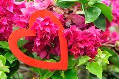 Un coeur rouge accrochant dans un arbre rose de bouganvillée Photos libres de droits