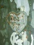 Un coeur simbolising l'amour de deux personnes a coupé en arbre Photo stock
