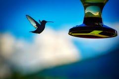 Un colibrì e un alimentatore contro un cielo blu immagini stock