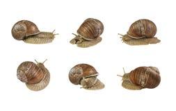 Un collage de caracoles en diversas actitudes en el fondo blanco Imagen de archivo libre de regalías