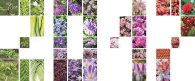 Un collage de flores, de plantas y de frutas bajo la forma de cuadros 2017 Imagen de archivo libre de regalías