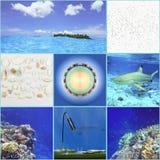 Un collage de las vacaciones en las zonas tropicales El concepto fotografía de archivo
