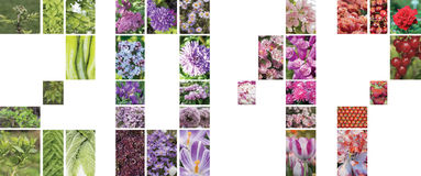 Un collage dei fiori, delle piante e dei frutti sotto forma di figure 2017 Immagine Stock Libera da Diritti