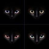 Un collage dei gatti che fissano nella macchina fotografica Fotografia Stock Libera da Diritti