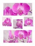 Un collage delle orchidee rosa Immagine Stock