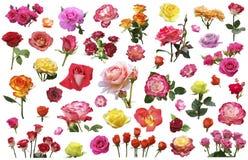 Un collage des fleurs des roses de différentes couleurs et variétés Photos libres de droits