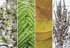 Un collage des scènes des quatre saisons Images stock