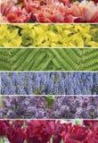 Un collage des usines olorful de  de Ñ Photos stock