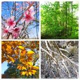 Un collage di quattro stagioni Fotografie Stock Libere da Diritti