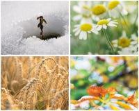 Un collage di quattro stagioni Fotografie Stock