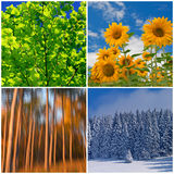 Un collage di quattro stagioni Immagine Stock