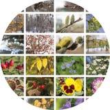 Un collage di quattro stagioni Fotografia Stock