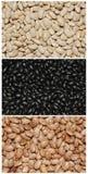 Un collage di tre tipi differenti di fagioli secci Immagini Stock Libere da Diritti
