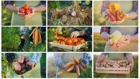 Un collage di 9 video sull'agricoltura e sulla raccolta fotografie stock