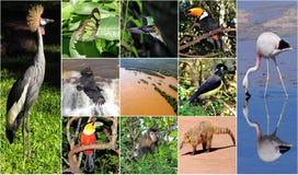 Un collage hecho de imágenes del parque nacional de Iguazu. Fotos de archivo