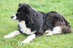Un chien sur l'herbe Images stock