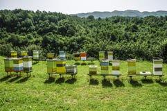 Un colmenar con las colmenas de la abeja fotografía de archivo libre de regalías