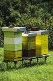 Un colmenar con las colmenas de la abeja imagen de archivo