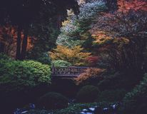 Un color muestra apagado durante tiempo de caída en los jardines del japonés de Portland Foto de archivo