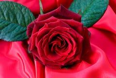 Un colore rosso è aumentato il raso rosso Immagine Stock