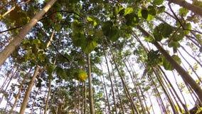 Un colpo che cerca lentamente gli alberi stock footage