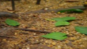 Un colpo delle foglie su terra stock footage