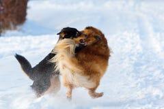 Un combattimento di due cani nella neve Fotografia Stock