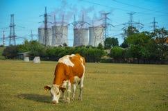 Un concept d'énergie verte renouvelable : une marguerite et une herbe au-dessus du symbole de l'énergie nucléaire cassée Photos stock