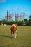 Un concetto di energia verde rinnovabile: una margherita e un'erba sopra il simbolo di energia nucleare rotta Immagine Stock