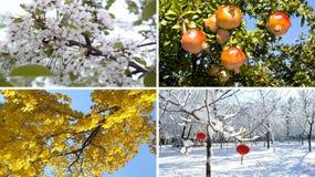 Un concetto di quattro stagioni Fotografie Stock Libere da Diritti