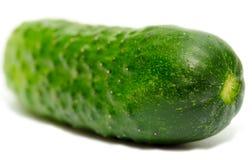 Un concombre Photographie stock libre de droits