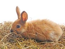 Un conejito se sienta en el heno Imagen de archivo libre de regalías
