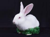 Un conejo blanco joven con las decoraciones de la Navidad Fotografía de archivo