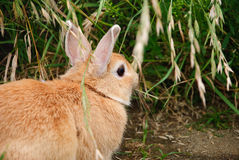 Un conejo del animal doméstico en el parque Fotografía de archivo