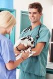 Un conejo en el veterinario que tiene un chequeo fotos de archivo