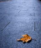 Un congé simple d'érable sur le trottoir de la ville Images libres de droits
